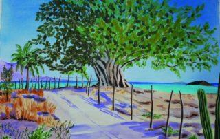 Baja fig tree