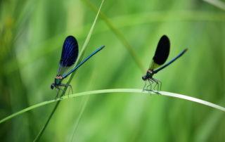 dragonfly vibration