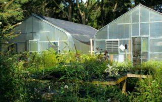 grow greenhouse food