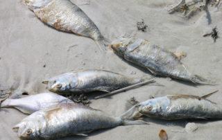 dead sea life