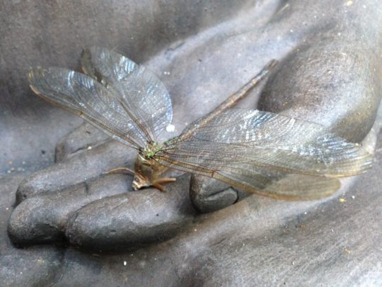 dying dragonfly