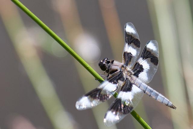 unique dragonfly