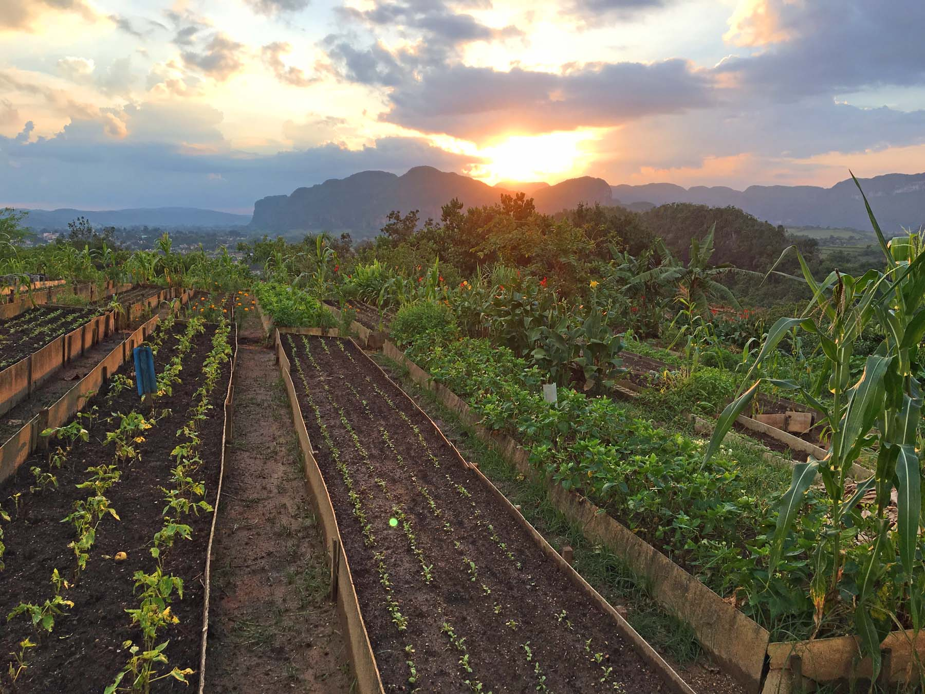 Organic Raised-Bed Gardening In Cuba
