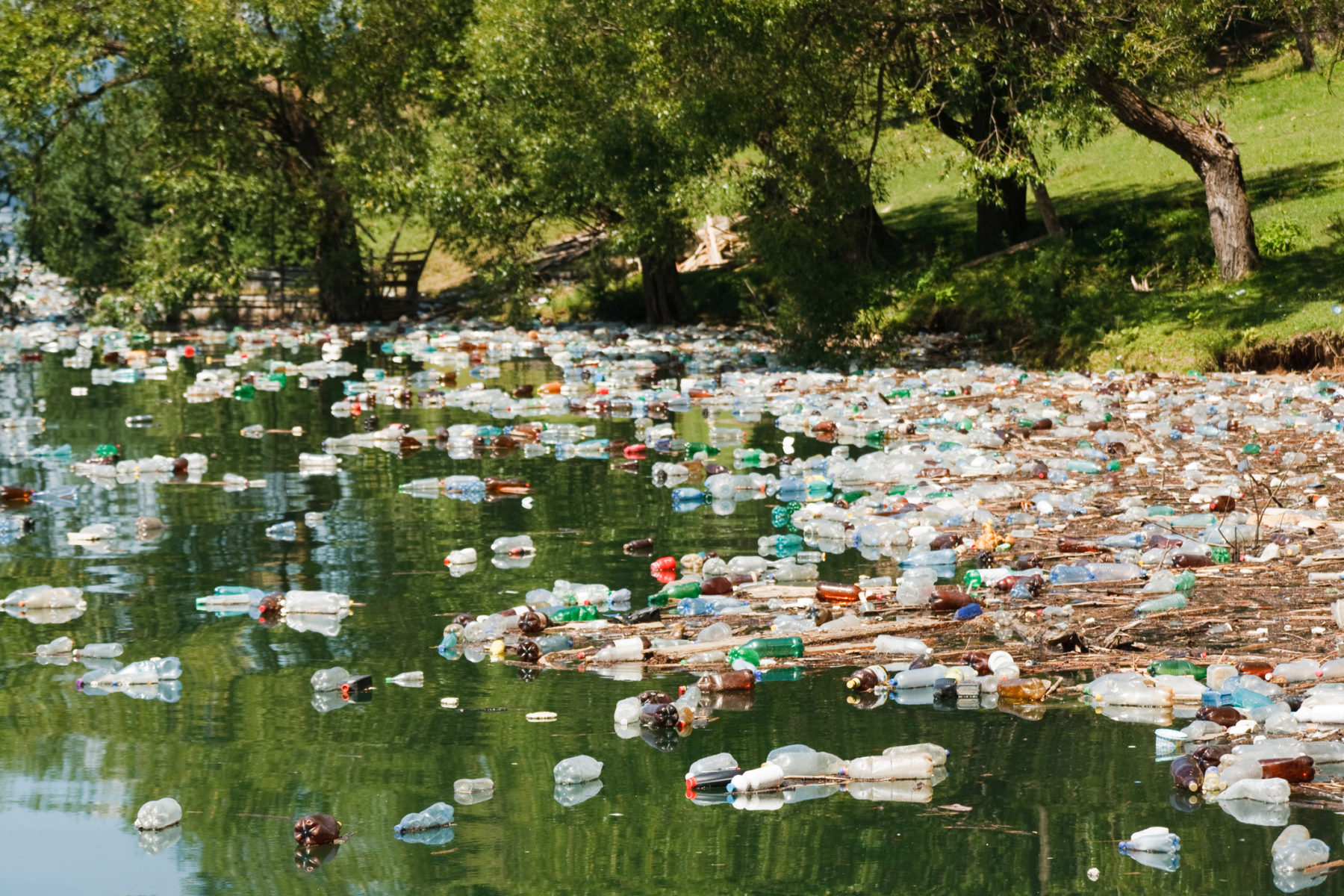 The Perilous Facts Of Living In A Plastic World