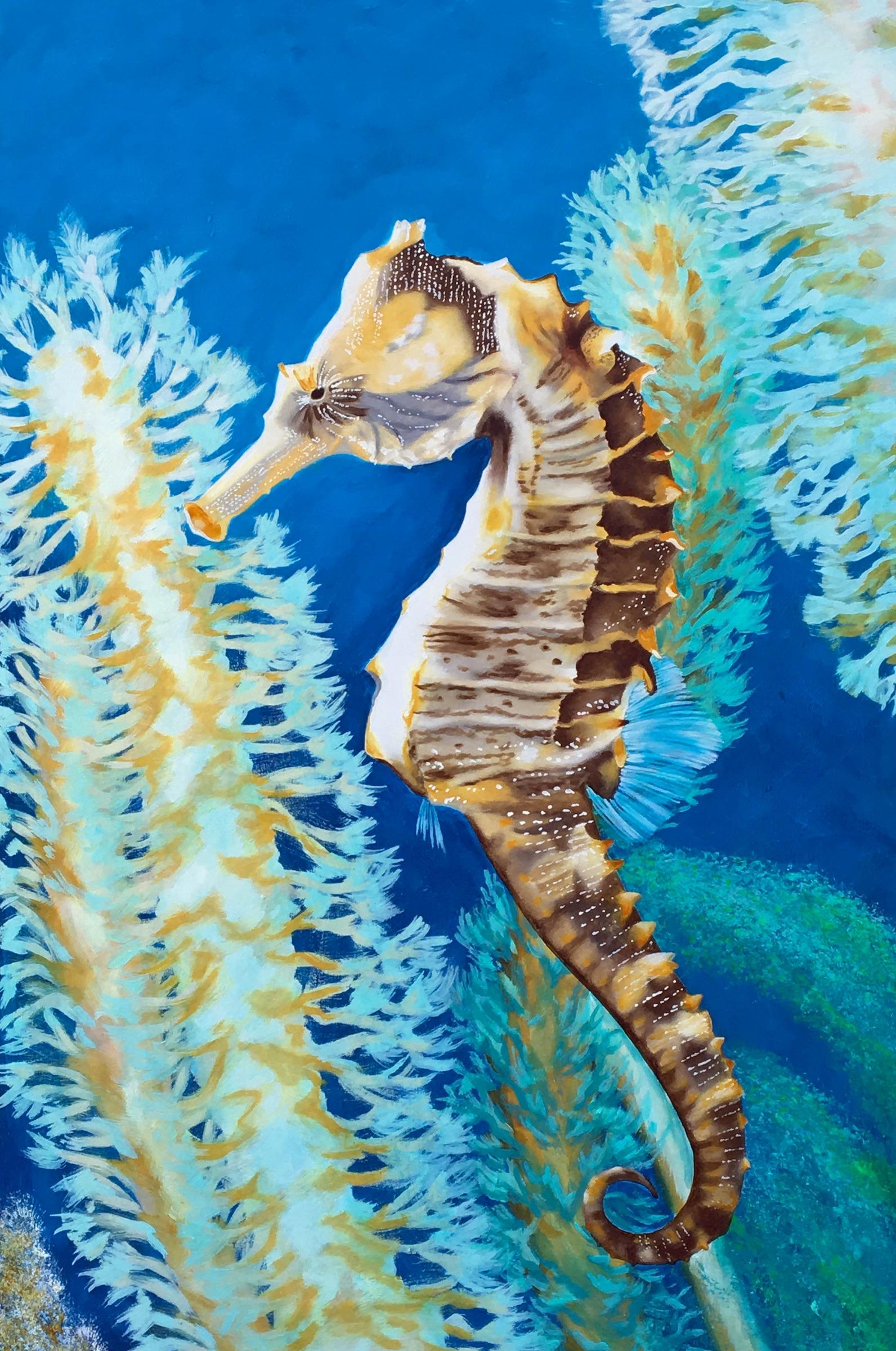 seahorse in coral