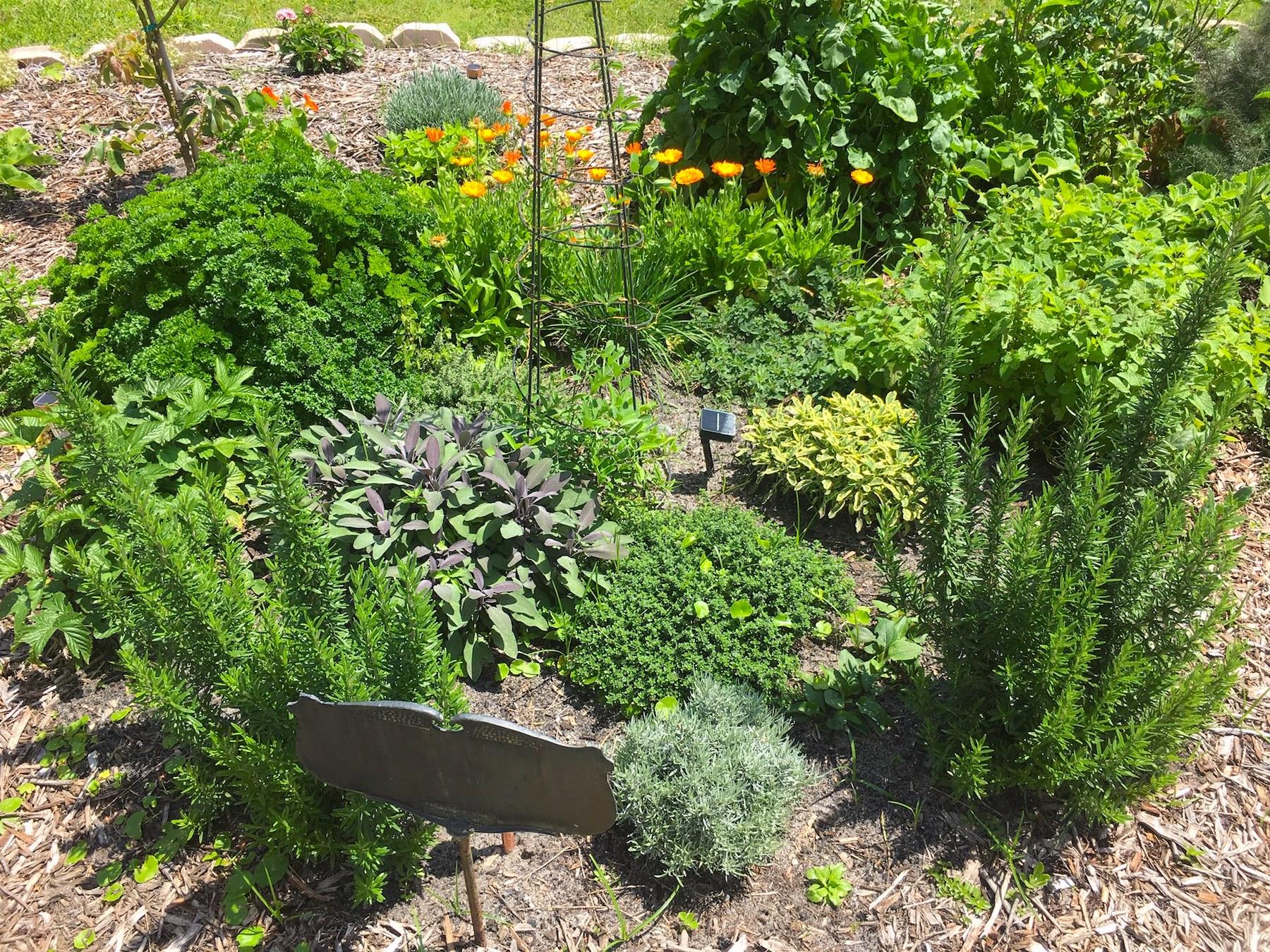 Fresh Garden Food Satisfaction